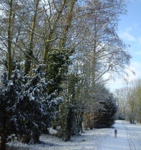 Sneeuw in het Roomburgerpark (2)