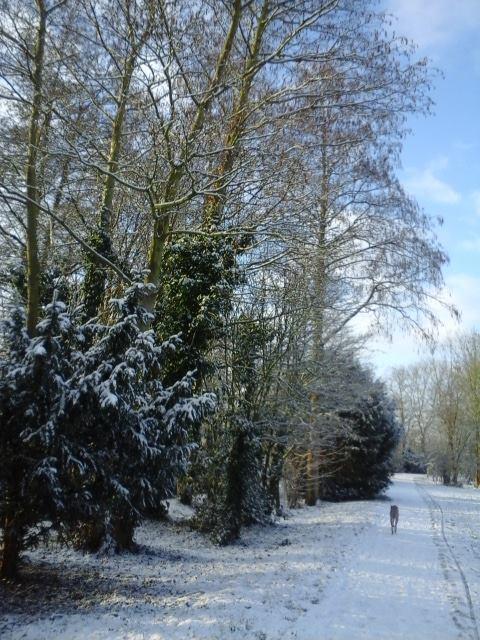 Lees meer over het artikel Sneeuw in het Roomburgerpark (2)