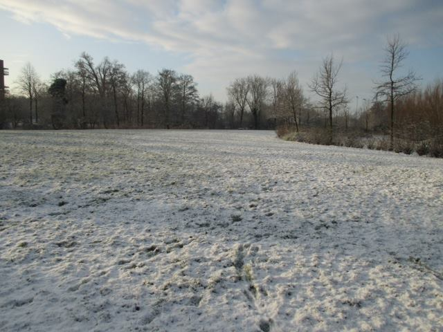 Sneeuw in het Roomburgerpark (1)