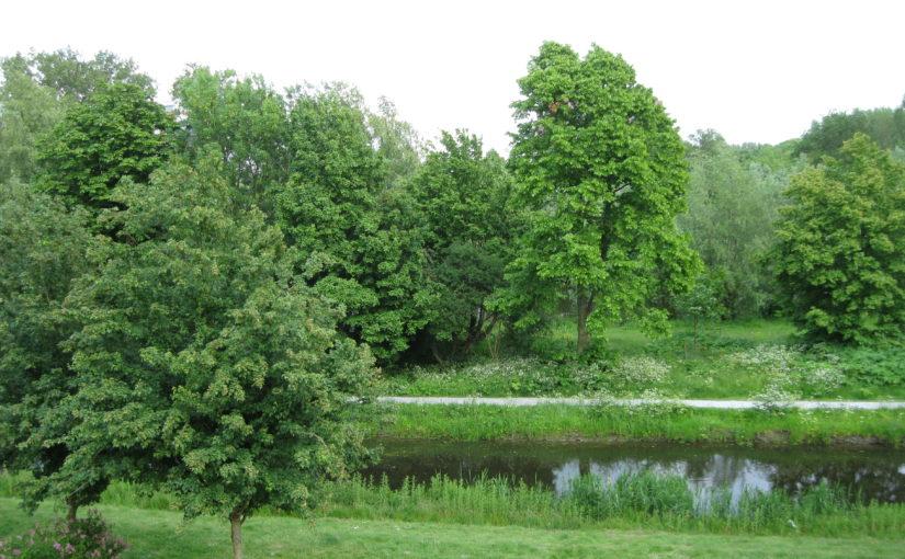 LNV wil meer groen in de stad